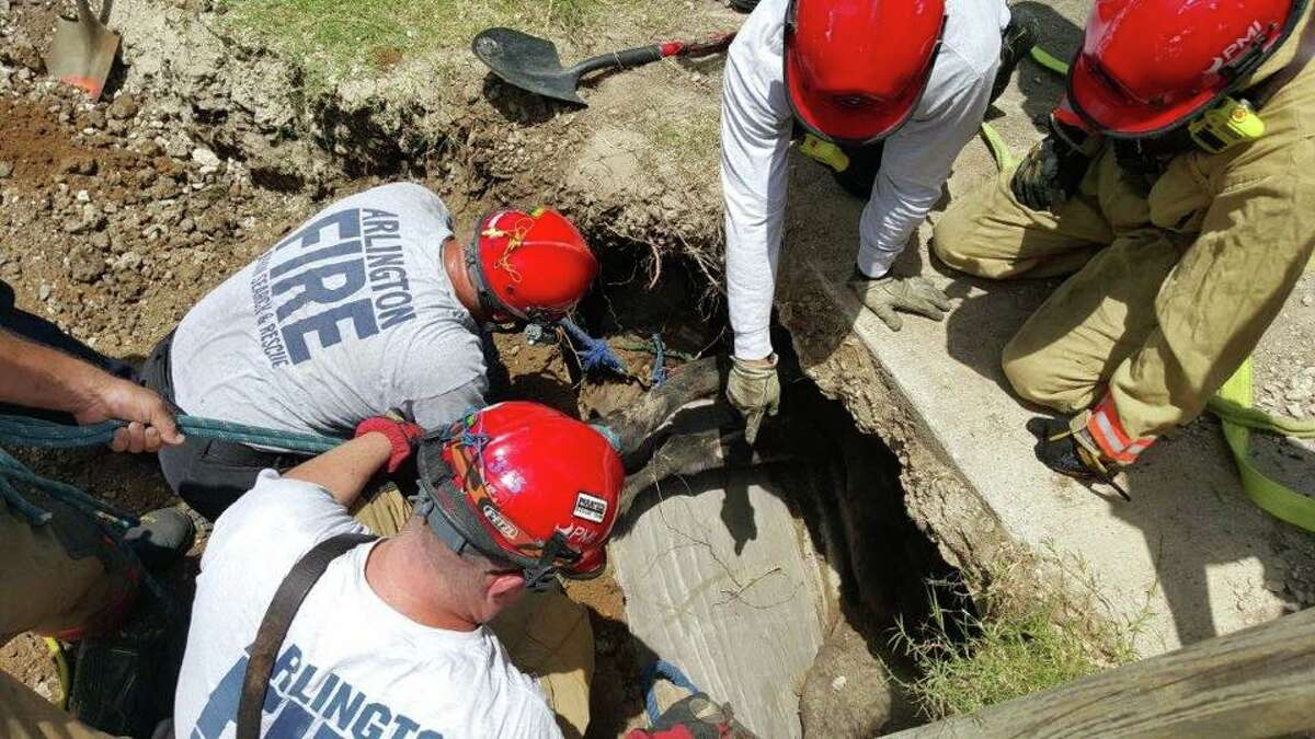 Ginger, a horse in Arlington, became trapped in a sinkhole after soil collapsed from under her on June 15, 2015, according to the Arlington Fire Department. After two hours, three rescue crews were able to free Ginger, who only had a few scratches on her legs and back. She was then sent to the Burleson Equine Hospital, where she is expected to heal quickly.