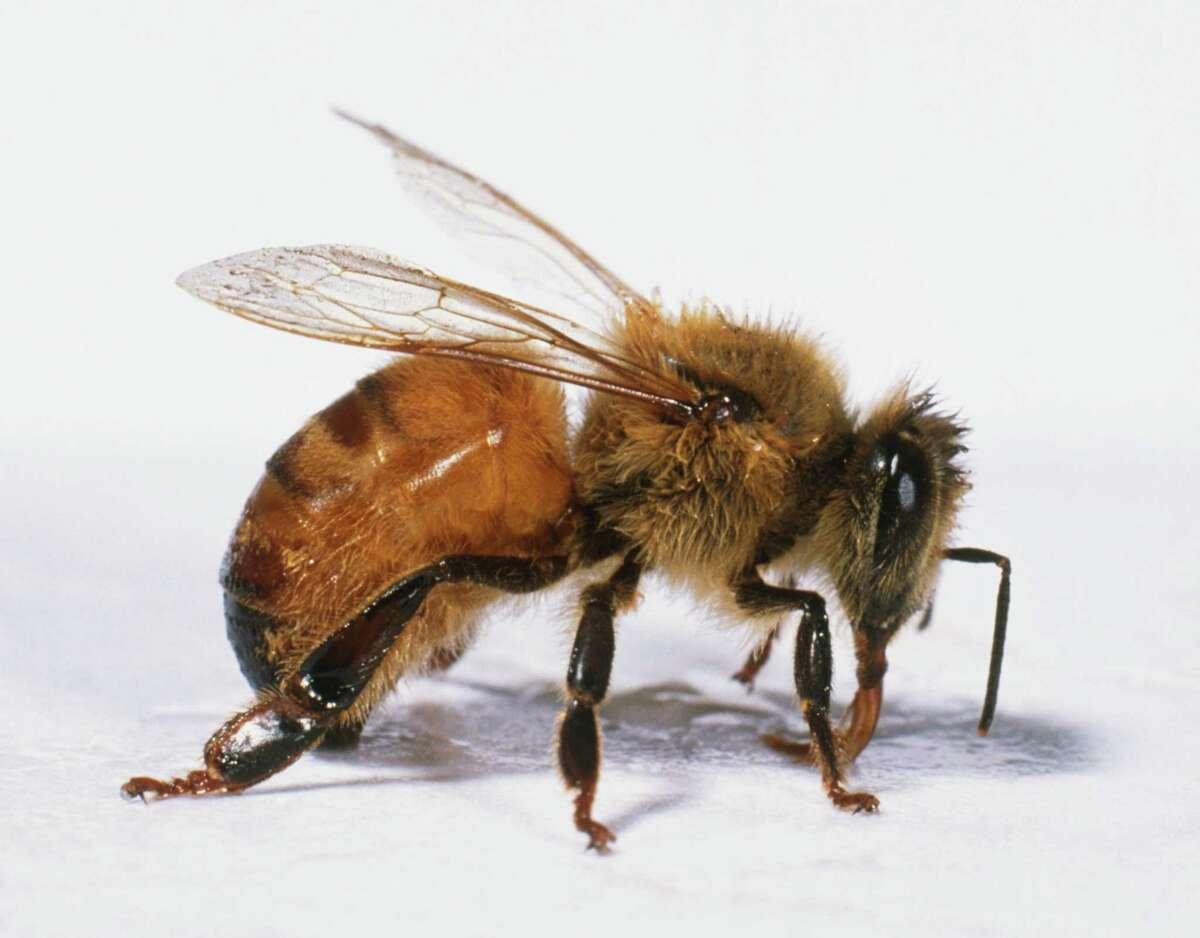 State Pollinator Western Honeybee: House Concurrent Resolution No. 65, 84th Legislature, Regular Session (2015).