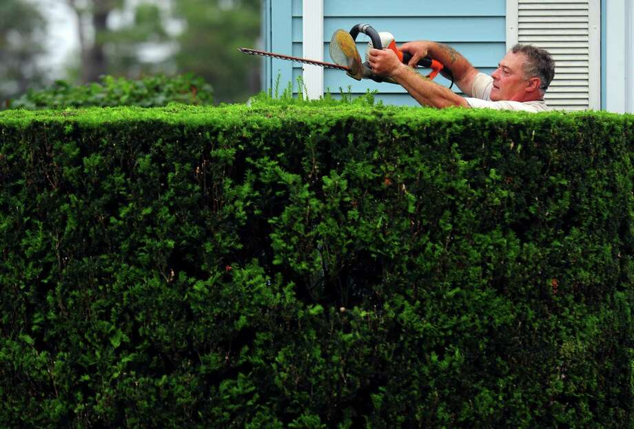"John Palmer trims his hedges at his home on Redfield Road in Fairfield, Conn., on Saturday June 20, 2015. When asked if this was his passion, due to the meticulously trimmed hedges, Palmer replied, ""No way! My wife just wants it done."" The hedges surround his home and he has to work on them several times a year. Photo: Christian Abraham / Hearst Connecticut Media / Connecticut Post"
