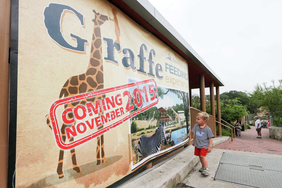 Three-year-old Mitchell Duncan inspects a sign featuring the new giraffe exhibit at the San Antonio Zoo during groundbreaking ceremonies for it there on Monday, June 22, 2015. The exhibit, which is scheduled to open this November, will be part of the Zoo's Africa Live Phase 3. The enclosure will feature three male reticulated giraffes that are coming from the Gladys Porter Zoo in Brownsville as well as other African hoofstock and birds in a more open and naturalistic habitat. MARVIN PFEIFFER/ mpfeiffer@express-news.net