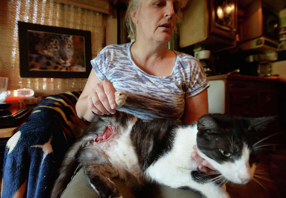 Gail Gates sits with her 7-year-old cat Panda, who was attacked by three loose pit bulls outside her family's trailer home in rural Vidor over a week ago. Gates found the cat, which had run away after the incident, several days later, alive but badly wounded. The skin beneath one back leg is torn open, showing the tendons and muscle beneath. Lacking the funds to pay for care, she started a crowd funding site and has raised enough to feel comfortable making an appointment. 