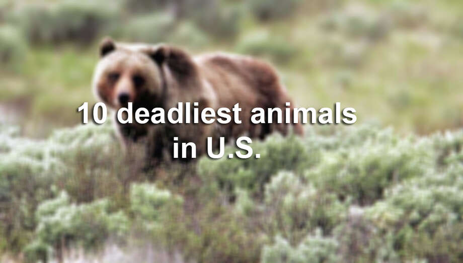 The Washington Post has pulled data from the CDC's extensive database to find out which animals are itching to take your life. Keep clicking to see the top 10 deadliest animals in the U.S. Source: Washington Post Photo: James Peaco, Photo Illustration / YELLOWSTONE NATIONAL PARK