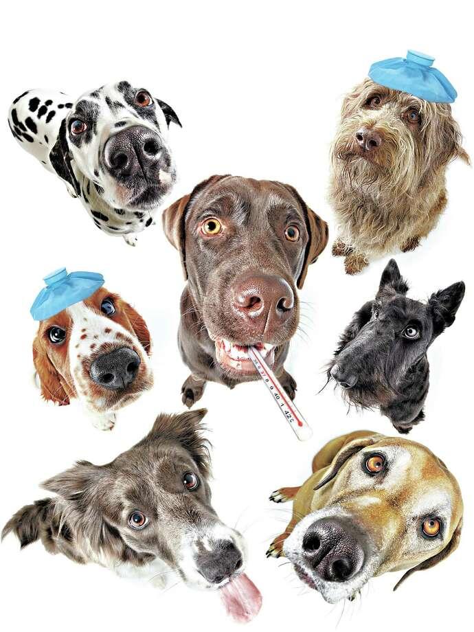 Seven Dogs Looking Up Photo: Gandee Vasan, Getty Images / (c) Gandee Vasan