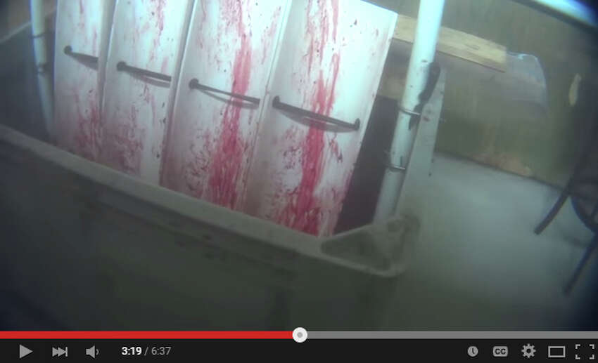A video published on June 23, 2015 by PETA appears to show shocking conditions at an alligator farm in Texas. These gator skins are sold to a facility owned by luxury fashion company Hermes, whose alligator skin Berkin bags are in high demand.