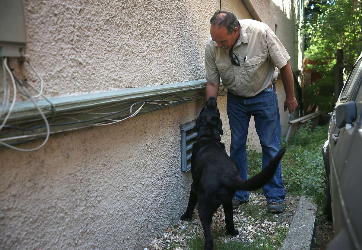 In 2015, Paul Dostie's cadaver dog Buster picked up a possible scent from missing college student Kristen Modaferri in the basement of the Jayne Avenue house she lived. Buster was renowned for his work in finding the remains of World War II soldiers who were missing in action. The black Lab has since passed away.