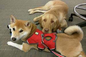 Celebrating your canine colleagues on 'Take Your Dog to Work Day' - Photo
