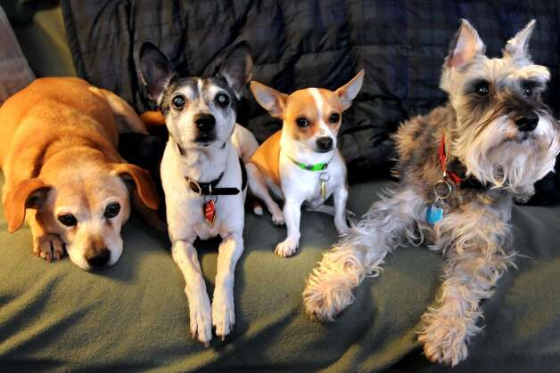 Dogs from left are Rosie, Oliver, Peanut and Hap captured in a quiet moment. (Photo courtesy of Cindy Schultz) Photo: ALL