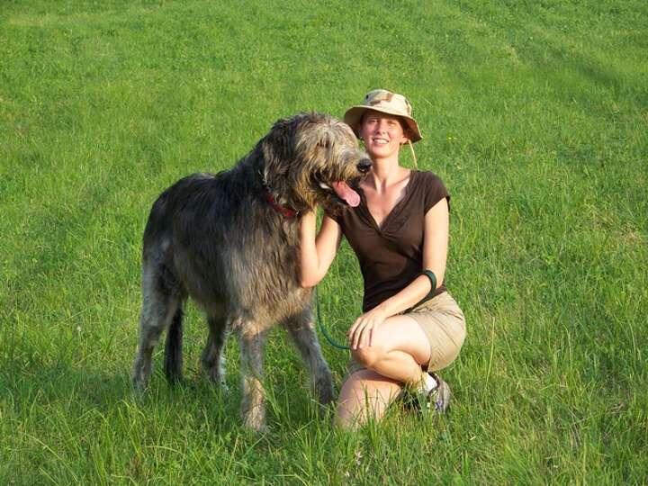 Irish Wolfhound Photo-...