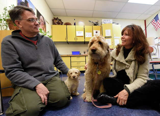 Labradoodle puppy Willow joins mature service dog Miss Siggy and their handlers Keith VanWagenen, 5th grade teacher, left and school social worker Cahterine Ricchetti at the Pine Bush Elementary School Tuesday morning Dec. 9, 2014 in Schenectady, N.Y.  Williow is being trained in the same style as elder Miss Siggy as a service dog to teach students  responsibility, as well as work with special needs children.  Willow is the second dog to be brought in to the program.    (Skip Dickstein/Times Union) Photo: SKIP DICKSTEIN, ALBANY TIMES UNION / 00029627A