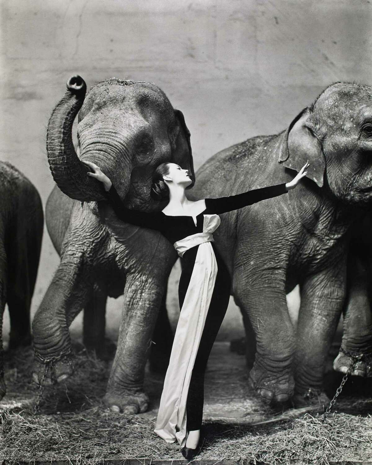 """Among works on view at MFAH through Oct. 11 in the show """"In Appreciation: Gifts in Honor of Anne Wilkes Tucker"""" is Richard Avedon's """"Dovima with Elephants, Evening Dress by Dior, Cirque déHiver, Paris, August 1955."""" (Gelatin silver print, the Museum of Fine Arts, Houston, promised gift of Karen Kelsey Duddlesten in honor of Anne Wilkes Tucker on the occasion of her retirement. The Richard Avedon Foundation)"""