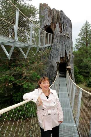 Stephanie Ratcliffe, executive director, on a suspension bridge that leads to a manmade snag on the new Wild Walk on Tuesday, June 23, 2015, at the Wild Center in Tupper Lake, N.Y. (Cindy Schultz / Times Union) Photo: Cindy Schultz / 00032307A