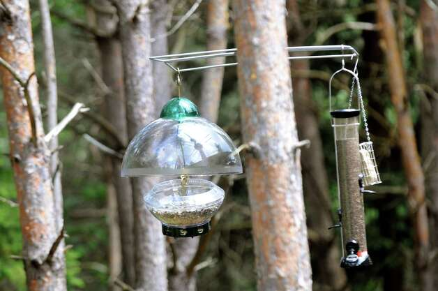 Bird feeders are part of the new Wild Walk on Tuesday, June 23, 2015, at the Wild Center in Tupper Lake, N.Y. (Cindy Schultz / Times Union) Photo: Cindy Schultz / 00032307A