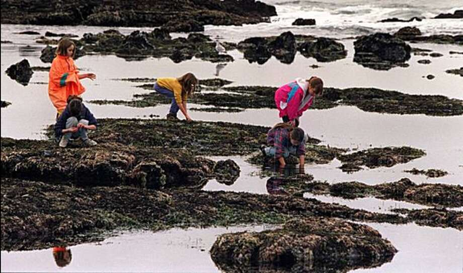 Fitzgerald Marine Reserve, Moss Beach. Take in a spectacle of sea anemones, crabs and sea stars in some of our country's most vibrant tidal pools. Best to visit at low tide. Photo: Terry Telfer