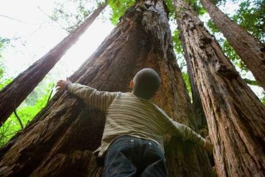 Muir Woods, Mill Valley: Hug a redwood tree. Photo: 40018.000000 Juan Silva, Getty Images / (c) Juan Silva
