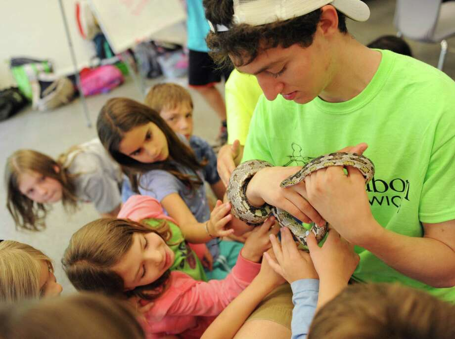 Camp Counselor Thomas Freund, 17, holds a snake as Lila Swartz, bottom, 7, of Stamford, Eliora Frankel Mordecai, 8, of White Plains, N.Y., and others gather around during the Summer Nature Day Camp at Audubon Greenwich Photo: Tyler Sizemore / Hearst Connecticut Media / Greenwich Time