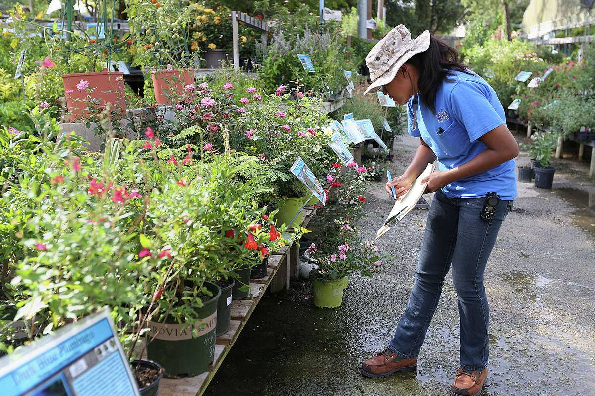 Employee Reychelle Beckman works inventory at Rainbow Gardens' Thousand Oaks location. Rainbow Gardens won Gold in the 2015 Readers Choice awards for Plants/Nursery.