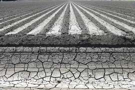 An irrigation canal near a parched field in Manteca, Calif., April 24, 2015. California's drought has made the Sacramento-San Joaquin Delta's limited supply of fresh water, which helps feed more than three million acres of farmland, a central battle zone between farmers and environmentalists. (Jim Wilson/The New York Times)