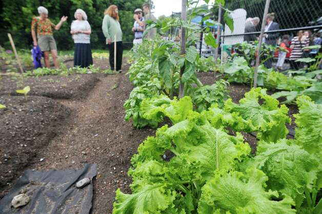 Visitors walk through the garden during the grand opening of the Capital Roots Ida Street Community Garden on Wednesday, July 1, 2015, in Troy, N.Y.  The  Ida Street Community Garden is the 50th community garden started by Capital Roots.  The garden was created in collaboration with the Troy Little Italy Neighborhood Association and a variety of private individuals and families.    (Paul Buckowski / Times Union) Photo: PAUL BUCKOWSKI / 00032426A