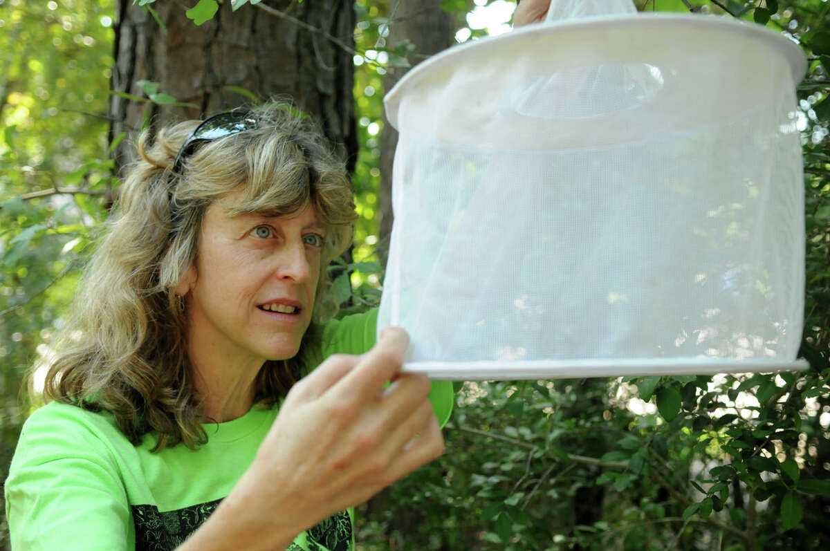 Lynne Aldrich, Environmental Services Manager for The Woodlands Township and a resident of The Woodlands, checks her gravid mosquito trap for mosquitos. Photo by Jerry Baker