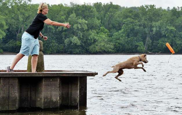 Karen Suydam of Delmar tosses a toy for her Wheaton Terrier George at the Corning Preserve boat launch Wednesday July 1, 2015 in Albany, NY.  (John Carl D'Annibale / Times Union) Photo: John Carl D'Annibale / 00032461A