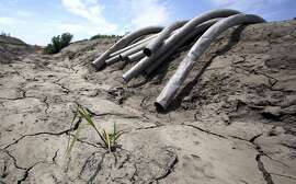 FILE - In this May 18, 2015, file photo, irrigation pipes hang along a dried irrigation canal on a field farmed by Gino Celli near Stockton, Calif. California's drought-stricken cities set a record for water conservation, reducing usage 29 percent in May, according to data released by a state agency Wednesday, July 1, 2015. (AP Photo/Rich Pedroncelli, File)