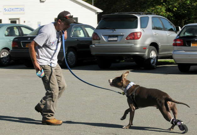 Richard Nash, walks with his dog Hudson as he trys out his new prosthetic paw at the Mohawk Hudson Humane Society on Saturday Oct. 12, 2013 in Menands, N.Y. Derrick Campana of Animal Orthocare LLC of Virginia fits Hudson with his newest prosthetic paw. Dr. Tom Bowersox a board certified veterinary surgeon who has worked with the railroad puppies over the past year, contacted Animal Orthocare to see if they could provide a new prosthetic and help Hudson adjust to a new adult size paw.  (Michael P. Farrell/Times Union) Photo: Michael P. Farrell, Albany Times Union / 00024251A