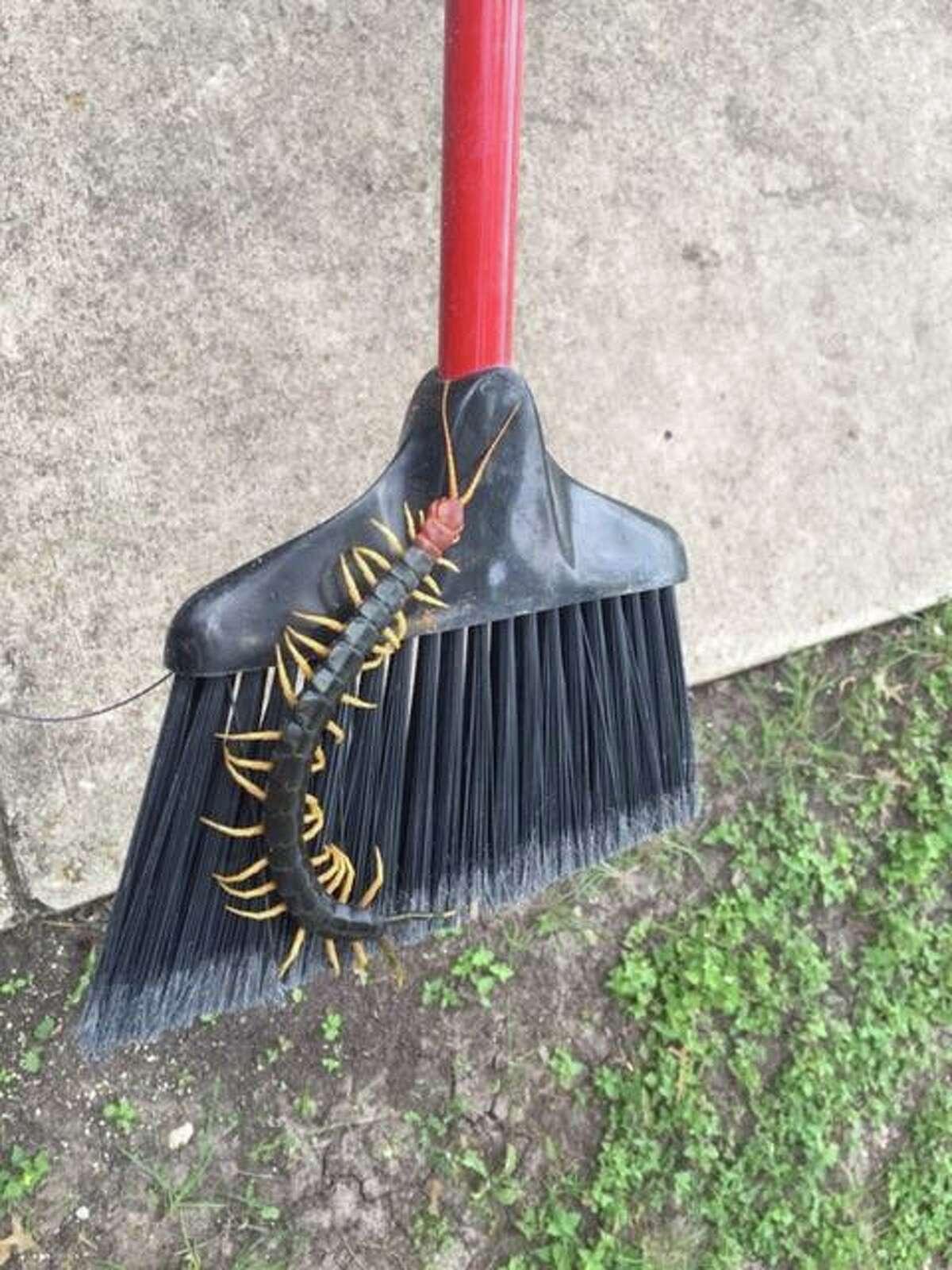 Texas Redheaded CentipedeREAD MORE:Texas' nightmare-inducing centipede caught on camera in Garner State Park