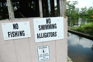 Man dies in apparent alligator attack - Photo