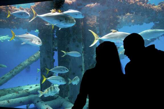 Visitors watch fish swimming at the Texas State Aquarium. The Islands of Steel exhibit shows the underwater habitat of an oil platform in the Gulf of Mexico.