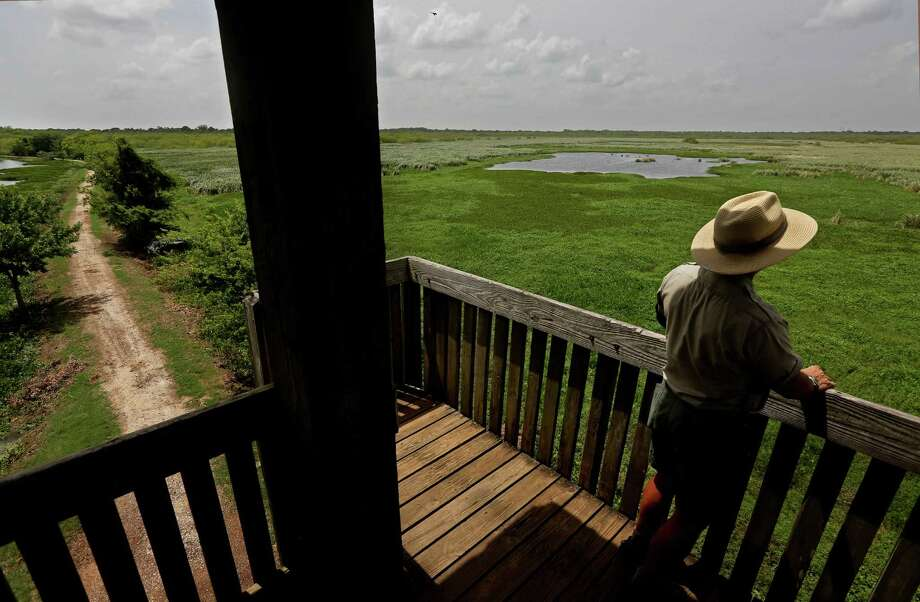 David Heinicke, park naturalist and state park police officer, looks from the observation tower along the 40 Acre Lake trail in Brazos Bend State Park Thursday, July 2, 2015, in Needville, Texas. Photo: Gary Coronado, Houston Chronicle / © 2015 Houston Chronicle