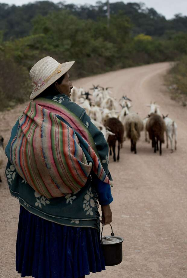 An indi genous woman herds goats outside Aguarague National Park in Bolivia. Pope Francis has called for re spect ing native peoples, working to alleviate poverty and living less waste fully to protect the planet. Photo: Juan Karita, Associated Press