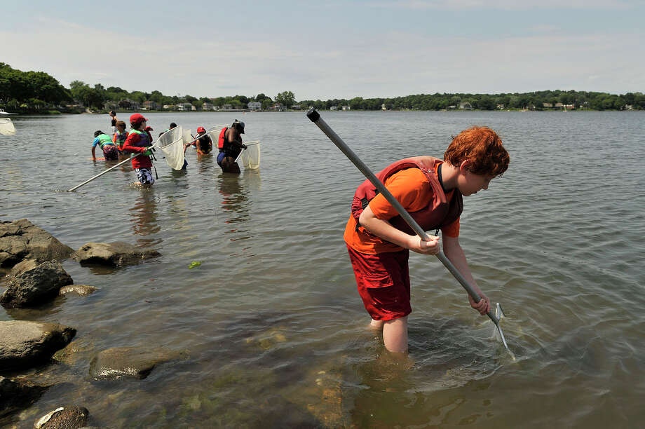 Ethan Farber uses a net to collect plant and animal life in the shallow waters of Holly Pond during Camp SoundWaters summer camp at SoundWaters on Cove Island in Stamford, Conn., on Tuesday, June 30, 2015. The boating and marine education summer camp started June 22 with weekly sessions ending August 21. Photo: Jason Rearick / Hearst Connecticut Media / Stamford Advocate