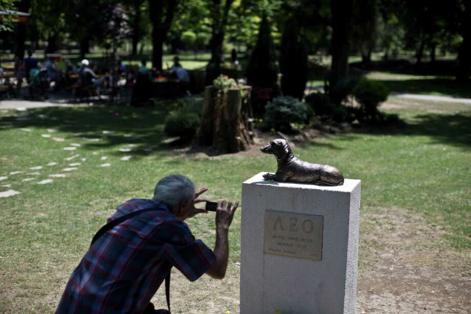 """A man takes a photo Friday of the monument to Leo, a dachshund that defended a child from another dog's attack, at a public park in Pancevo, Serbia.  on Friday. 12 kilometers east of Belgrade, Serbia, Friday, July 3, 2015. When a raging bull-mastiff cross-breed last year attacked a ten-year-old girl, Leo fearlessly jumped to her rescue, barking and biting at the dog way above his size and strength. Leo paid his courage with his life, but the citizens of a northern Serbian town have made sure he is not forgotten. The engraving on the monument reads: """"Leo, to all the small heroes with big hearts"""" in Serbian. (AP Photo/Marko Drobnjakovic) Photo: Marko Drobnjakovic, STR / AP"""