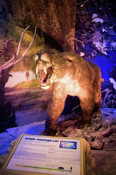 New Ice Age exhibit at the Witte Museum Photo: Witte Museum