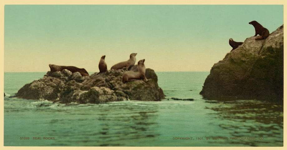 Seal rocks by the Cliff House Photo: Library Of Congress/Courtesy