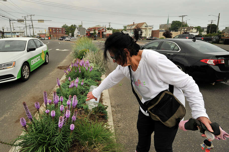 "Dee Smith, a member of the Friends of Cummings, West and Czecik Parks, waters plants on the median on Jefferson Street at the corner of Magee Avenue in Stamford, Conn., on Monday, July 6, 2015. Last year members of the Friends of Cummings, West and Czecik Parks removed 50 bags of fill out of the unattractive median strip and replaced it with organic topsoil and at least 50 plants meant to attract bees and butterflies. Member Kathleen Mathews says that they ""Just want to make the arteries going to the beaches beautiful."" She says, ""It's changing the neighborhood, there is not as much trash."" Photo: Jason Rearick / Hearst Connecticut Media / Stamford Advocate"