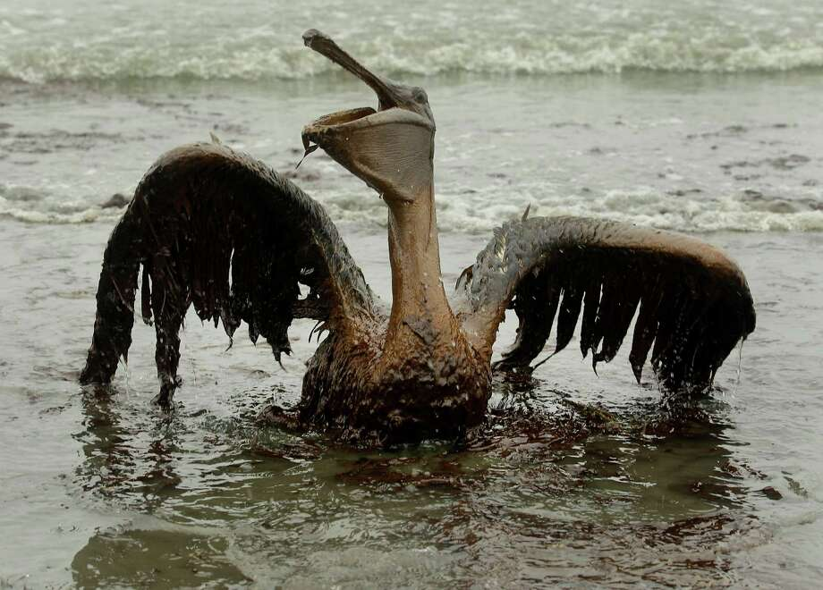 "FILE - In this June 3, 2010 file photo by Charlie Riedel, a brown pelican covered in oil tries to raise its wings on the beach at East Grand Terre Island along the Louisiana coast. Riedel tagged along on a media trip with Louisiana Gov. Bobby Jindal on a National Guard helicopter to East Grand Terre Island, where Jindal was showing off a sand berm originally meant to halt erosion, not oil. ""A couple hundred yards up the beach, I see this bird mired in oil,"" Riedel recalled. ""So I go over there, and within a few minutes, pretty much everyone was over there."" A pelican struggling against the sludge had caught Riedel's eye, but there were gulls and other birds too. ""Those, to my knowledge, were the first photos that were widely seen of oiled birds from the spill,"" Riedel recalled. The game-changing nature of the images he'd captured started to dawn on Riedel as he reviewed them on the ride back from what had started as a routine assignment. He quickly went to work filing them from a community center in Grand Isle, Louisiana, that was a staging point for media and public officials, as well as people making spill claims. ""The BP representative there caught wind of what I had, and he kind of came and looked over my shoulder,"" Riedel said. ""He didn't really say anything, but he kind of shook his head."" Interview requests poured into Riedel's inbox. ""It caused quite a stir. It put the story back on front pages."" (AP Photo/Charlie Riedel, File) Photo: Charlie Riedel, STF / AP"