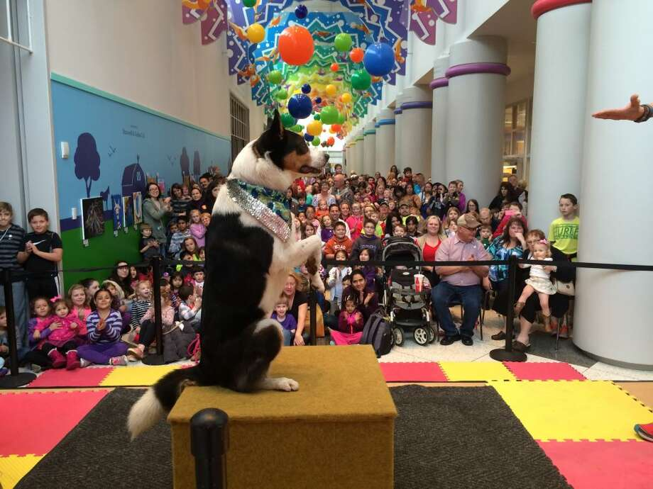 The Children's Museum of Houston will have you begging for more doggone fun during the Dog Days of Summer, which features dog-centric activities for kids off all ages. Photo: Courtesy Photo