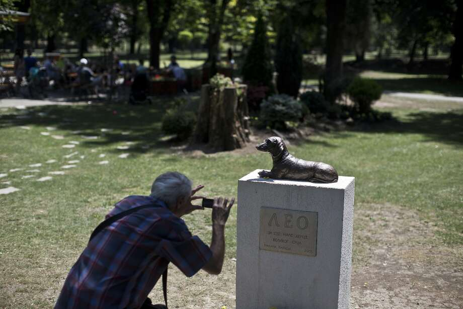 A man photographs the monument to Leo, a dachshund that defended a child from an attack by another much larger dog, at a public park in Serbia. Photo: Marko Drobnjakovic, Associated Press