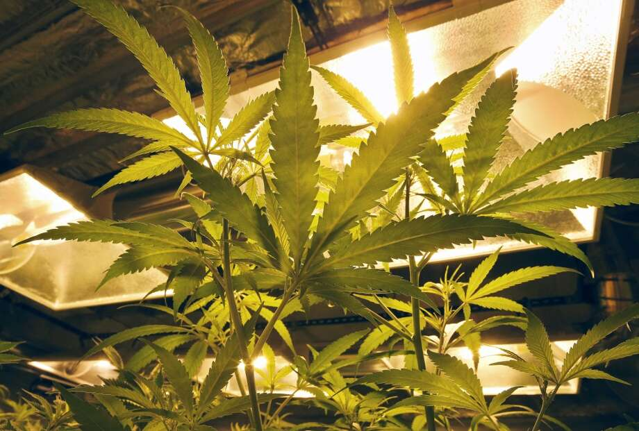 Get ready for 2016 elections ... and more legal weed.  Photo: AP