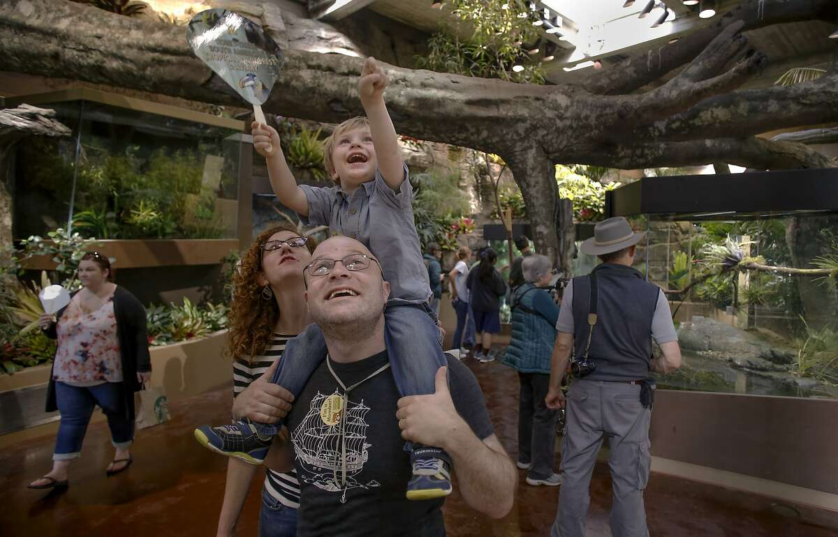 George Robbins, 2 points out a bird to his father Andrew and mother Kate Bedford of San Francisco, as the San Francisco Zoo opens their new South American Tropical Rainforest and Aviary in San Francisco, Calif., Calif., on Sat. July 11, 2015.