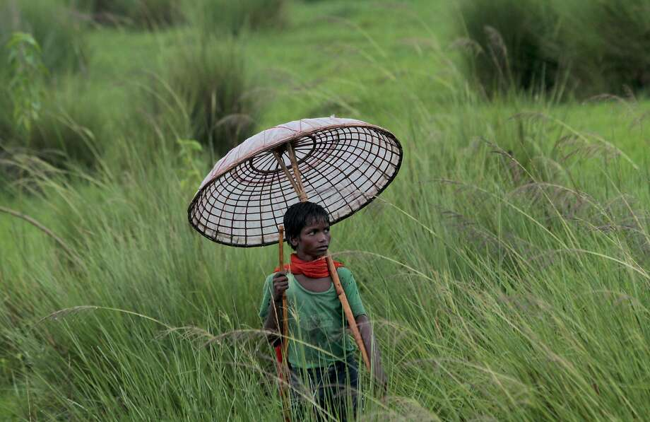 A young Indian villager holds a traditional handmade umbrella as he grazes his buffaloes at a field on the outskirts of Bhubaneswar, India, Saturday, July 11, 2015.  Photo: Biswaranjan Rout, Associated Press