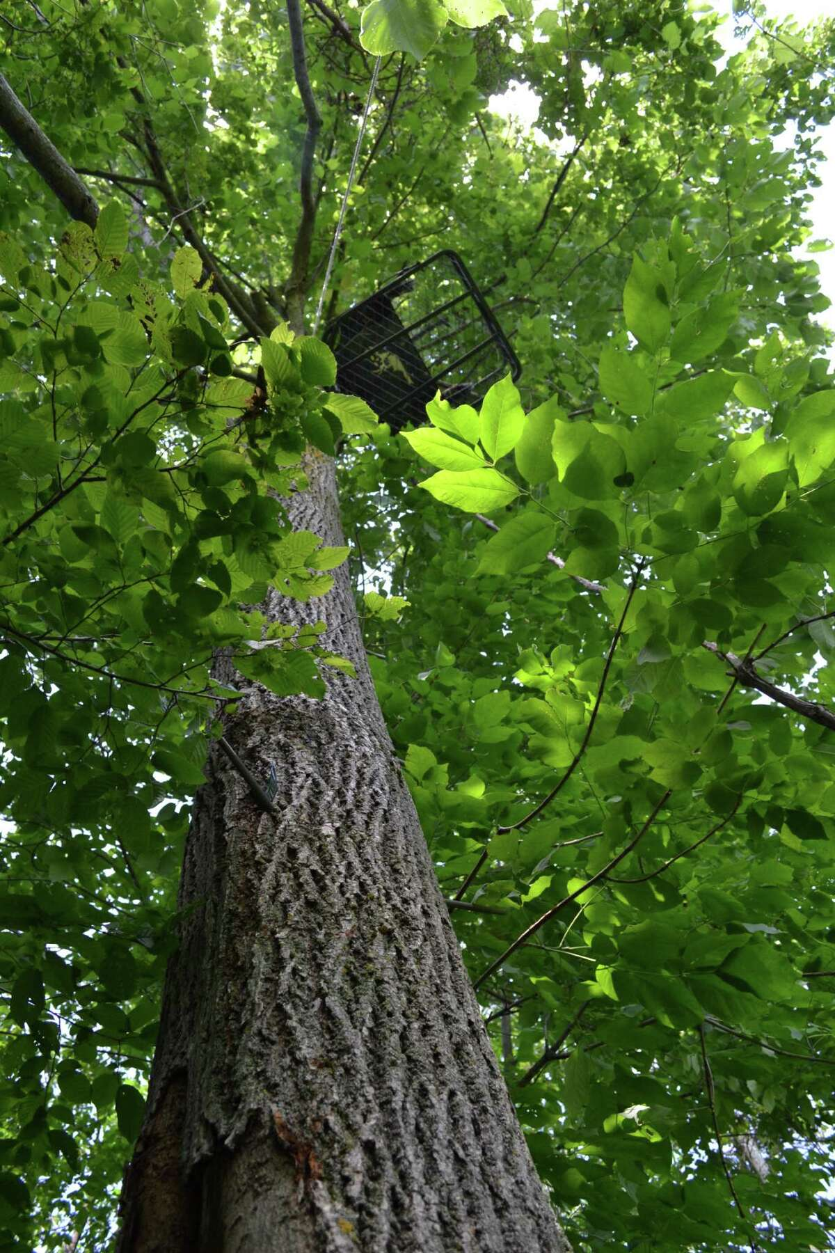 The Warren County Sheriff's Office said a bowhunter appeared to have lost his footing from a tree stand and died Sept. 28, 2021. It's unclear if it was a chain tree stand, like the one shown. But it was a stand that was 20 to 25 feet high. (Keshia Clukey/ Times Union)