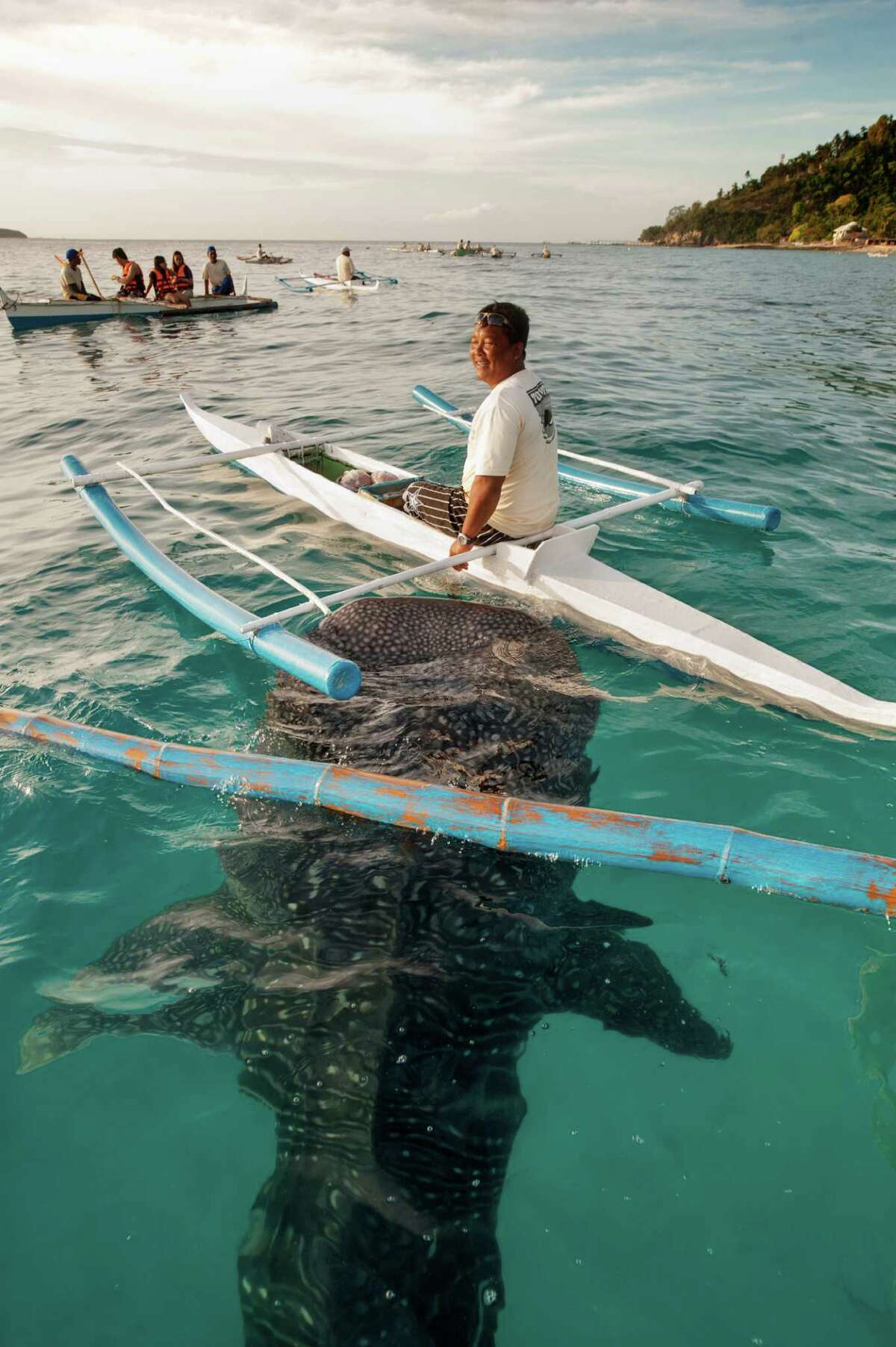 A whaleshark swims up to greet a man on an outrigger canoe - tourists and vacationers enjoy canoeing over the friendly marine life that live in Oslob on Cebu Island. (Photo by Jonas Gratzer/LightRocket via Getty Images)