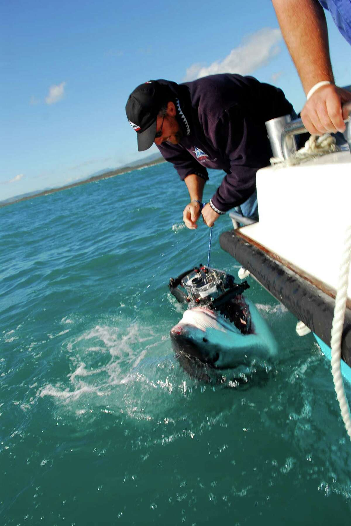 A great white shark bites Michael's camera as he tried to photograph it for his finprinting project in the sea off Dyer Island, South Africa. An international team of scientists led by a British University are building an extraordinary new computer system aimed at identifying every single member of one of the world's most feared predators - the Great White Shark. The University of Bristol is developing software that will automatically recognise individual dorsal fins of animals cruising the world's oceans. For the first time ever it will add to a central database experts hope will give them a unique insight into the species' population and one day give them the truth on numbers of the animals and their movements. Spectacular pictures show how Swiss marine biologist Michael Scholl, Founder and Director of the White Shark Trust, spent 10 years photographing over 1,500 great white's using his 'finprinting' technique. His is currently the world's biggest great white database and will be the basis for the new computer system. (Photo by Sultan Bin Al Shiekh Mejren / Barcroft Media / Getty Images)