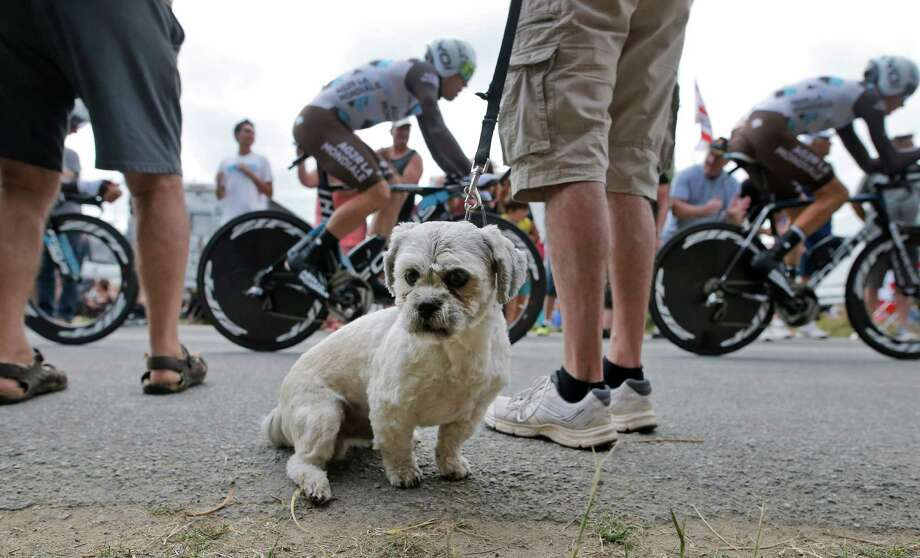 The passing of riders in Sunday's Tour de France team time trial doesn't capture everyone's attention. Photo: Laurent Cipriani, STR / AP