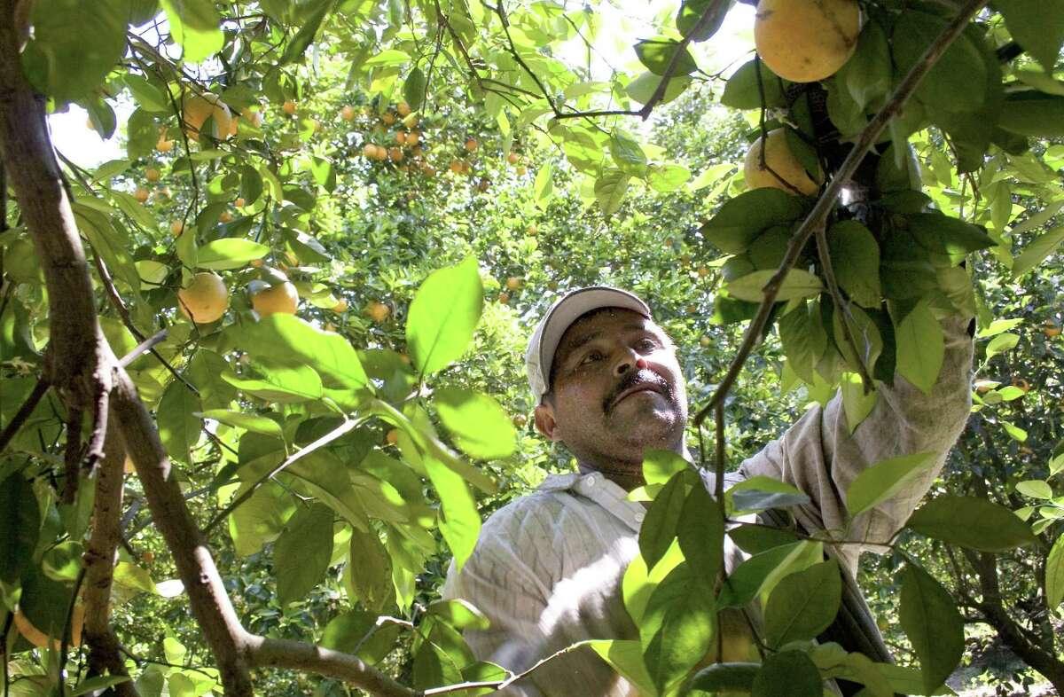 Misc. Agricultural Workers CaliforniaIdahoOregonNew MexicoWashington