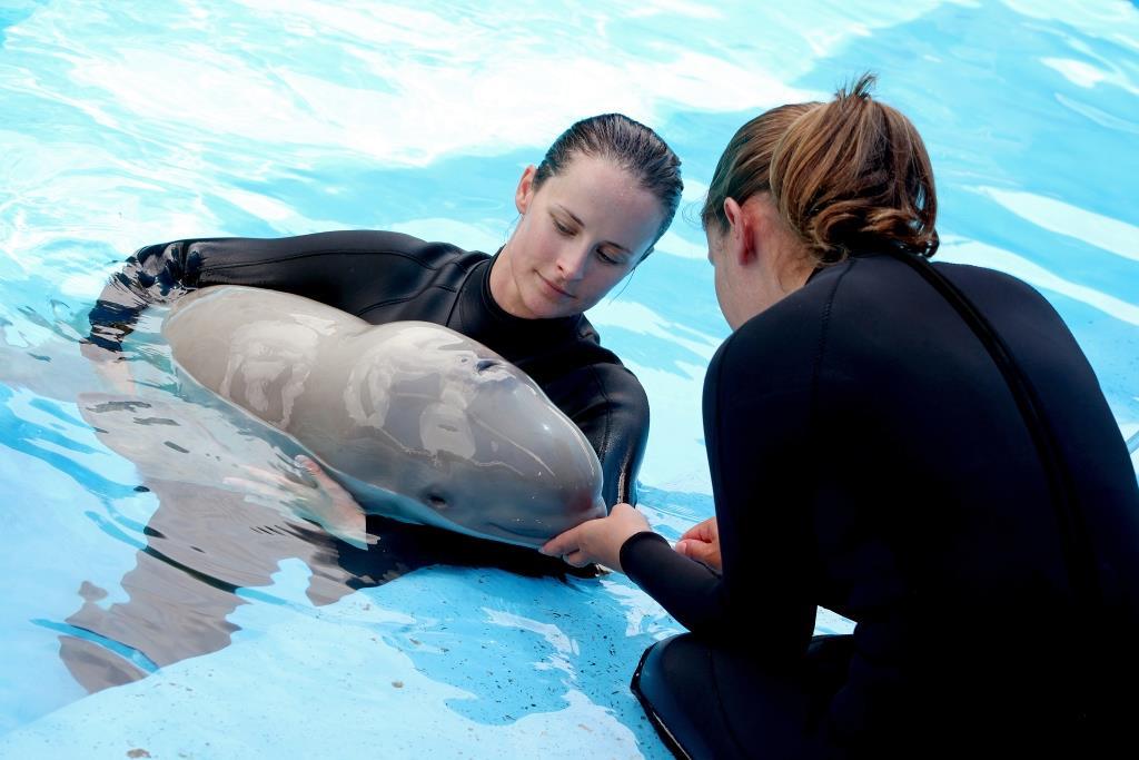 Seaworld Whale Dies Three Weeks After Premature Birth