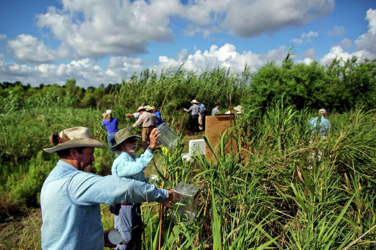 Members of the Texas State Soil and Water Conservation Board and other officials release Arundo wasps at a test site.