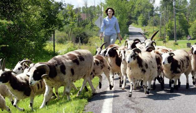 Former state Sen. Cecilia Tkaczyk herds her flock of Jacob sheep between pastures at her farm Friday July 10, 2015 in Delanson, NY.  (John Carl D'Annibale / Times Union) Photo: John Carl D'Annibale / 00032551A